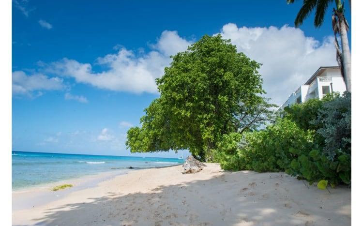 Mahogany Bay – Chanel no 5